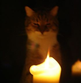 Cats and Candles